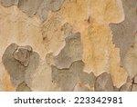Background Of Plane Tree Bark