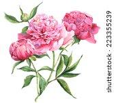 Pink Peonies  Botanical...