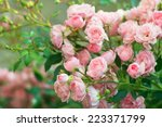 Stock photo background of bouquet of pink blooming rose bush 223371799