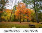 maple tree in the fall | Shutterstock . vector #223372795