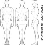 male body standing anatomical... | Shutterstock .eps vector #223480261