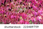 Colorful autumn leaves on a house wall - stock photo