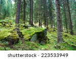 Coniferous Forest On The...