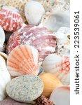sea shells on sand | Shutterstock . vector #223539061