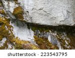 Nature Abstract   Lichen 1