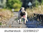 Stock photo almond the pug 223584217