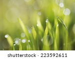 green fresh grass in morning... | Shutterstock . vector #223592611