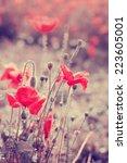wild poppy flowers   vivid... | Shutterstock . vector #223605001