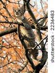 cat | Shutterstock . vector #2236483