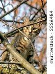 cat | Shutterstock . vector #2236484