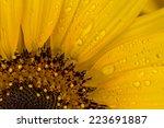 Close Up To A Beautiful Yellow...