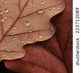Texture Of Autumn Leaves With...