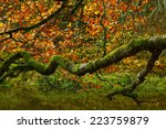 Branching Autumn Tree Branch