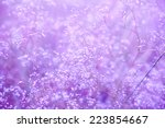 Stock photo purple background with small flowers 223854667