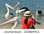 Tourist Photographing Pelicans...
