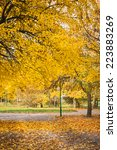 autumn in the park   Shutterstock . vector #223883269