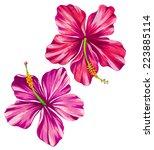 Beautiful Garden Hibiscus...