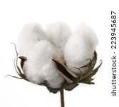 cotton isolated on white...   Shutterstock . vector #223945687