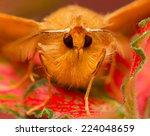 moth | Shutterstock . vector #224048659