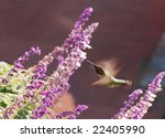 hummingbird   Shutterstock . vector #22405990