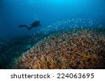 diver and schooling fish above... | Shutterstock . vector #224063695
