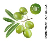 vector green olives isolated... | Shutterstock .eps vector #224108665