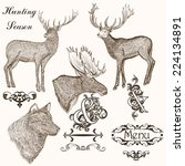 set of vector detailed animals... | Shutterstock .eps vector #224134891