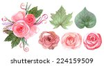 set of flowers and leaves... | Shutterstock . vector #224159509