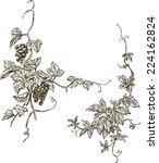 grapevine | Shutterstock .eps vector #224162824