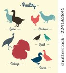 set of poultry silhouettes made ... | Shutterstock .eps vector #224162845
