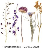 Set Of Wild Alpine Flowers...