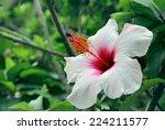 Hibiscus Flower In The Garden....