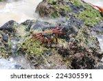 crab on rocks | Shutterstock . vector #224305591