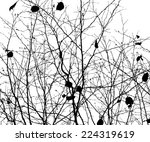tree branches forest. vector | Shutterstock .eps vector #224319619