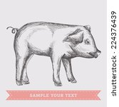 pig. vector illustration. | Shutterstock .eps vector #224376439