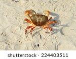 Crab On The Beach   Koh Tachai  ...