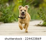 Purebred Dog Outdoors On A...