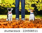 Stock photo two happy dogs with owner sitting on grass in the park looking up 224508511