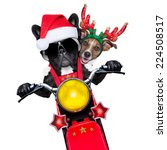 Two Christmas Dogs A Motorbike - Fine Art prints