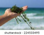 A Handful Of Fresh Seaweed...