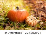 Close Up Of Pumpkins On Foliage