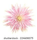 flower isolated on white...   Shutterstock . vector #224608375