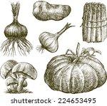 drawn vegetables   Shutterstock .eps vector #224653495