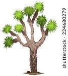 Illustration Of The Yucca...