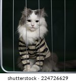 cat criminal behind bars | Shutterstock . vector #224726629