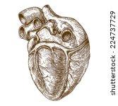 vector engraving heart on white ... | Shutterstock .eps vector #224737729
