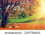 autumn  fall landscape with a... | Shutterstock . vector #224756641