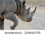 Постер, плакат: Critically endangered Black Rhinoceros