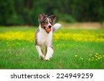 Stock photo playing dog 224949259