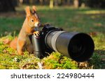 Squirrel As A Photographer With ...